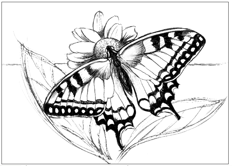 Line Art Of Butterfly : Images about clipart on pinterest clip art